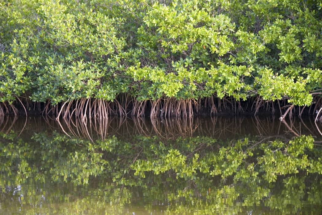 related studies about mangroves